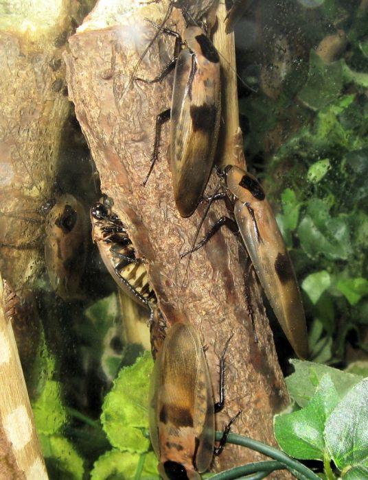 Самые большие насекомые в мире (47 фото)