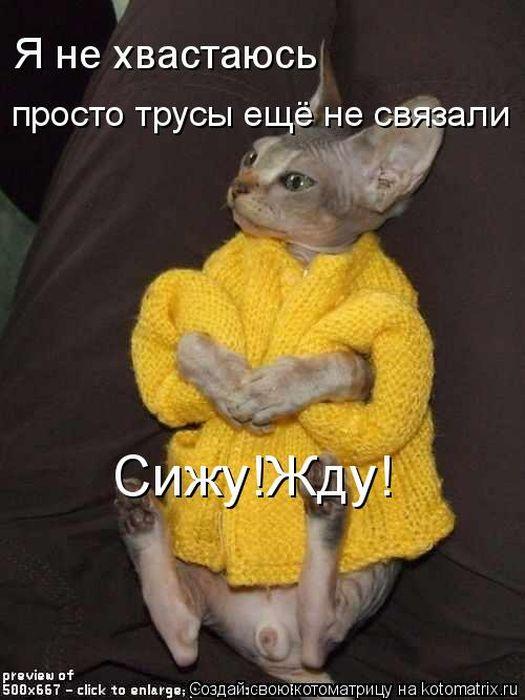 http://de.trinixy.ru/pics4/20111209/kotomatrix_02.jpg