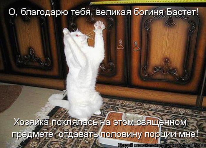 Смешные кошки (Выпуск 3) Приколы - YouTube