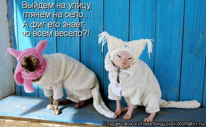 http://cdn.trinixy.ru/pics4/20111209/kotomatrix_28.jpg