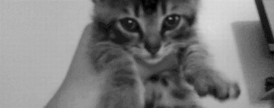 Кошачьи гифки (50 гифок)