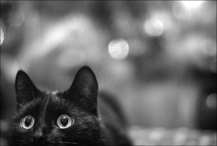 Кото-фото (135 фото)