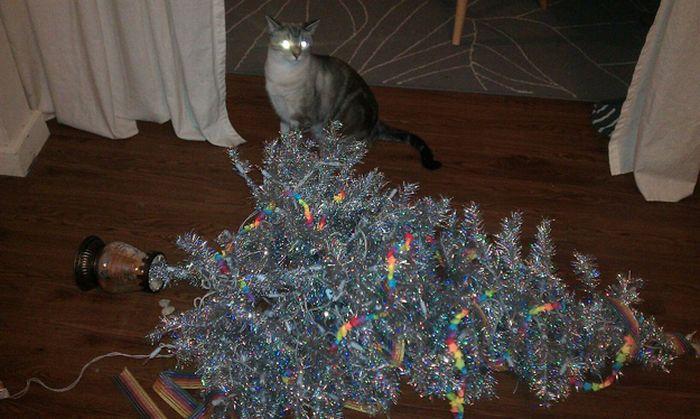 Коты, которые не любят рождество (20 фото)