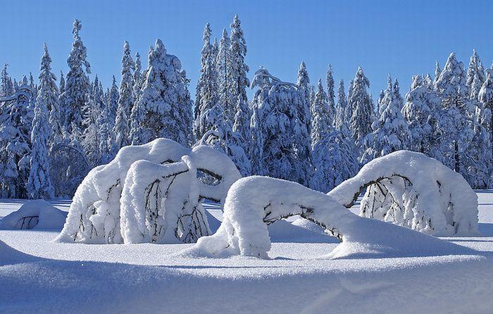 Зима (35 фото)