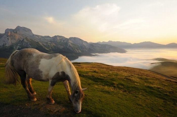 Лучшие фото National Geographic (60 фото)