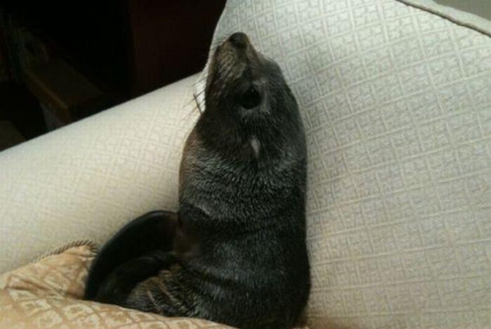 Любопытный тюлень (7 фото)
