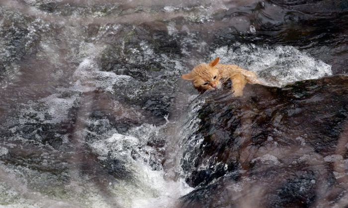 Лучшие фотографии животных за 2011 года (50 фото)