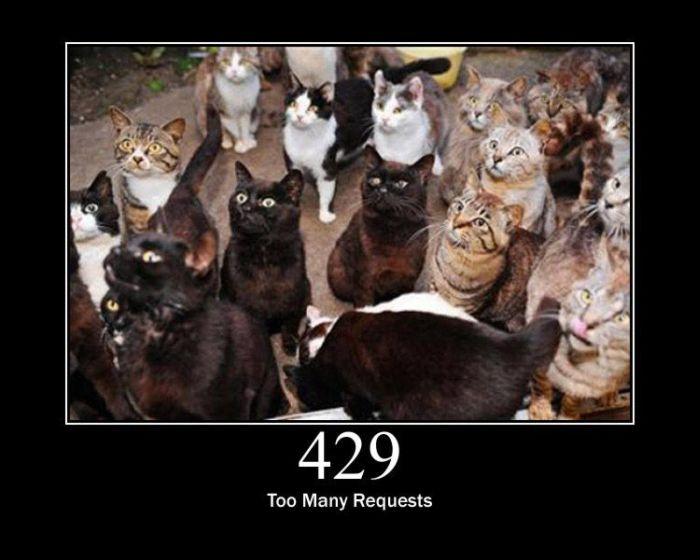 Ошибки сервера по-кошачьи (15 фото)