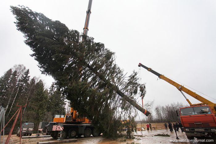 Самая главная елка страны (11 фото)