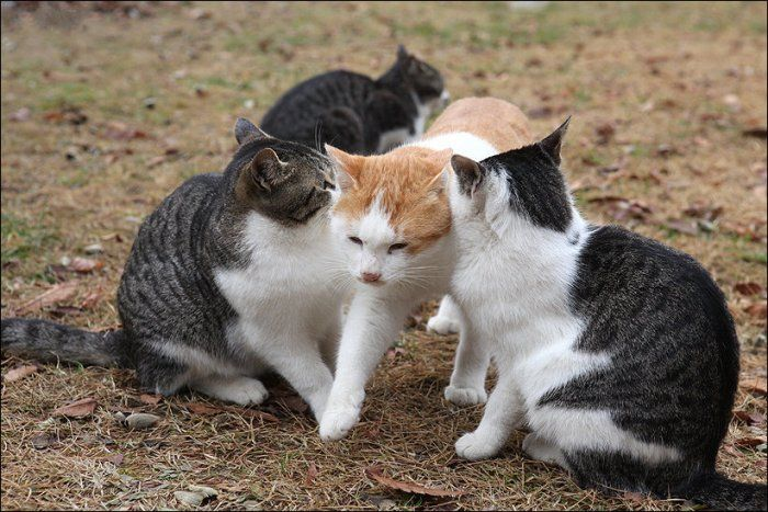 Любовь по-кошачьи (5 фото)