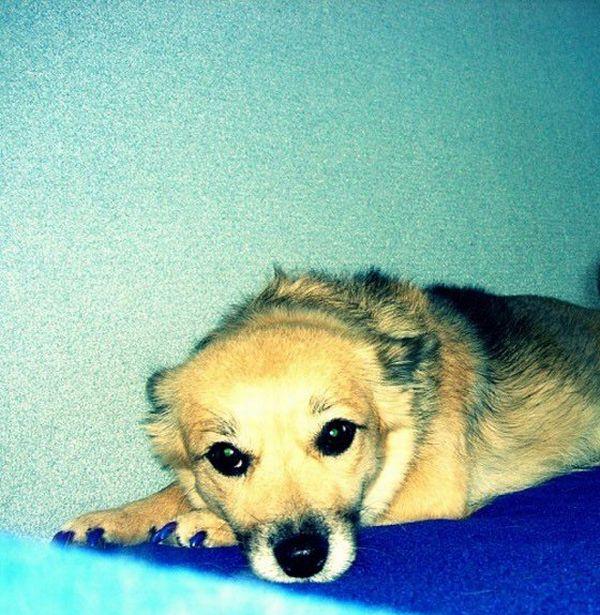 Гламурный пес (11 фото)