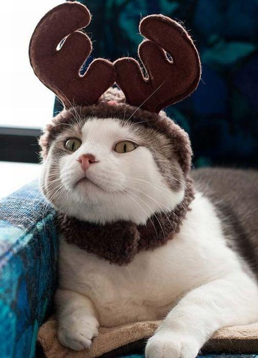 Kedi Resimleri (110 Fotograf)