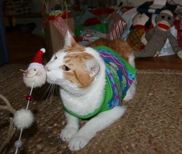 Коты готовятся к новому году (108 фото)