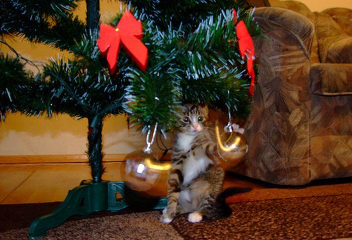 Штушка.  Животные.  Смешной кот играет шаром.