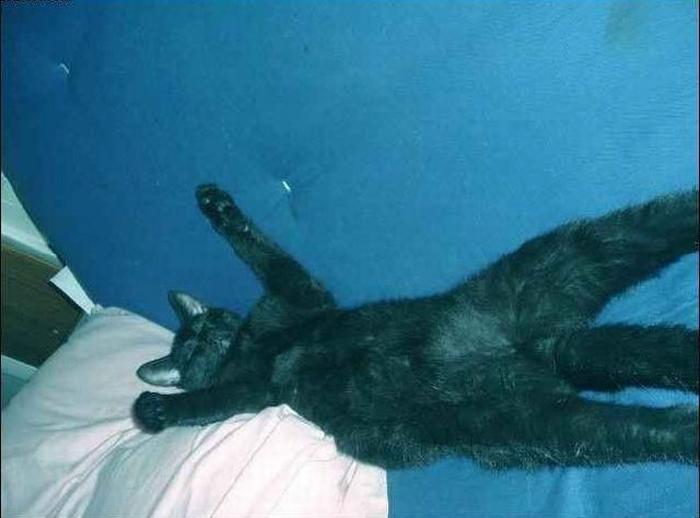 Кот лентяй (4 фото)