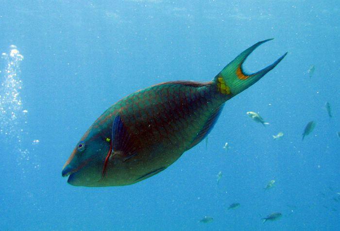 Обитатели водных глубин (53 фото)