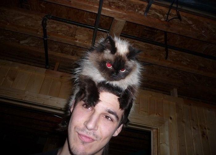 Как сделать кошачью голову на фото