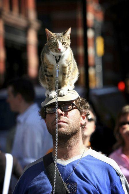 свое рисунок на голове кошки фото надо смазывать