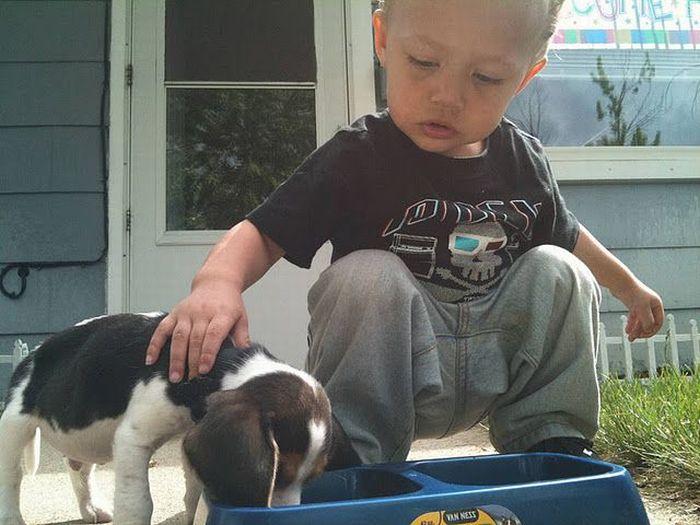 Первый щенок (2 фото)