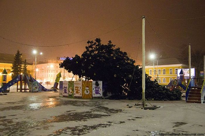 В Петрозаводске упала елка (4 фото)