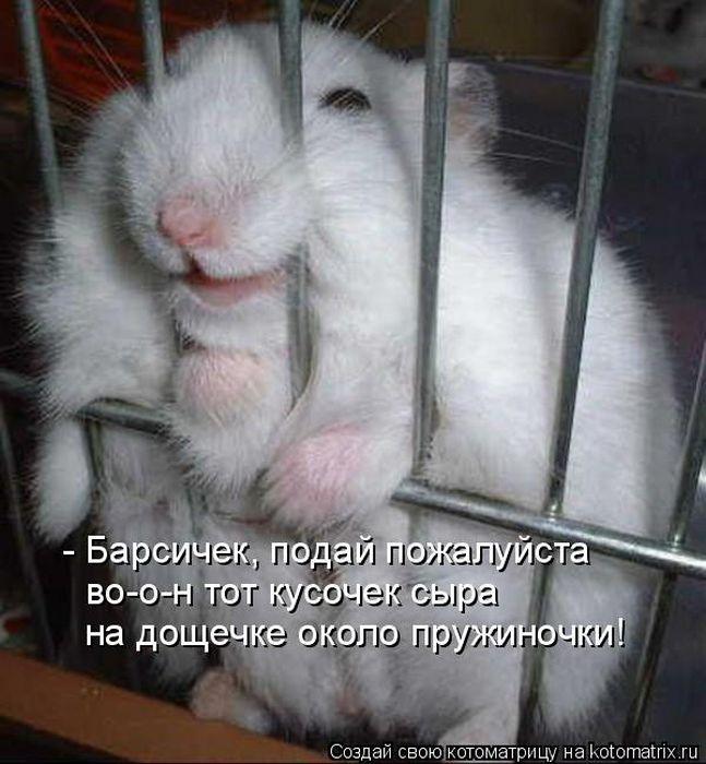 """"""",""""trinixy.ru"""