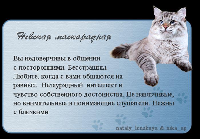Про котов (16 картинок)