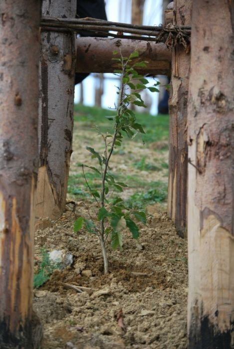 Храм, который растет (13 фото)