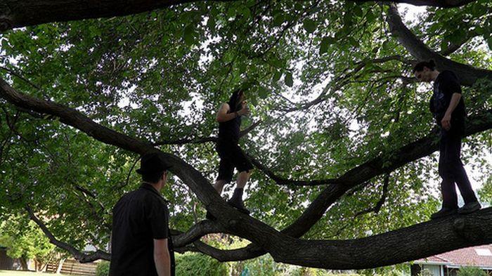 Готы на деревьях (39 фото)