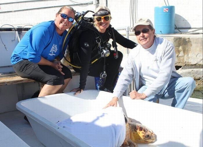 Рыба фугу против морской черепахи (5 фото)