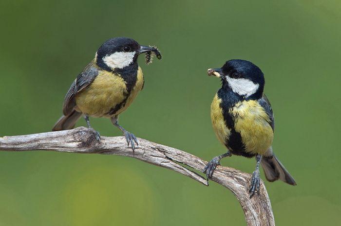 Красивые фотографии птиц (47 фото)
