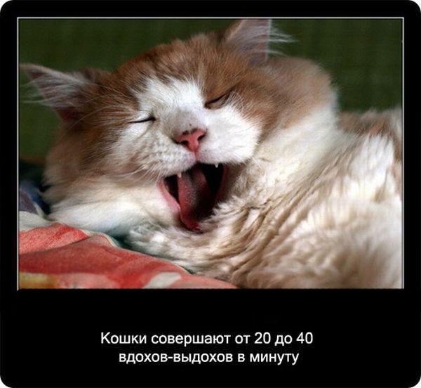 kotofakti_23.jpg
