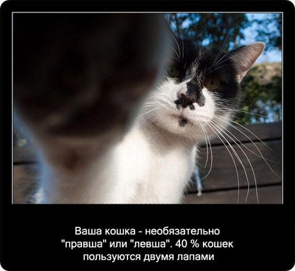 kotofakti_51.jpg