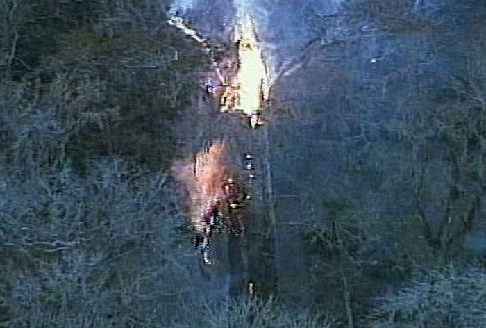 Сгорело одно изсамых старых деревьев (18 фото)