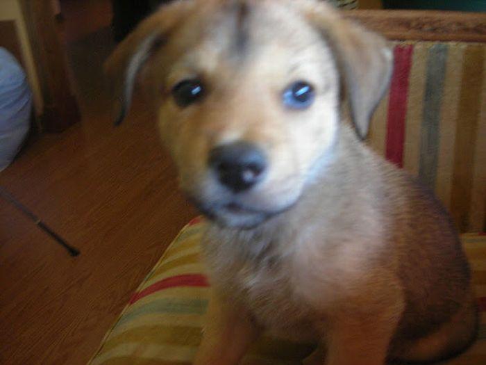 Особый пес Мюррей (14 фото)