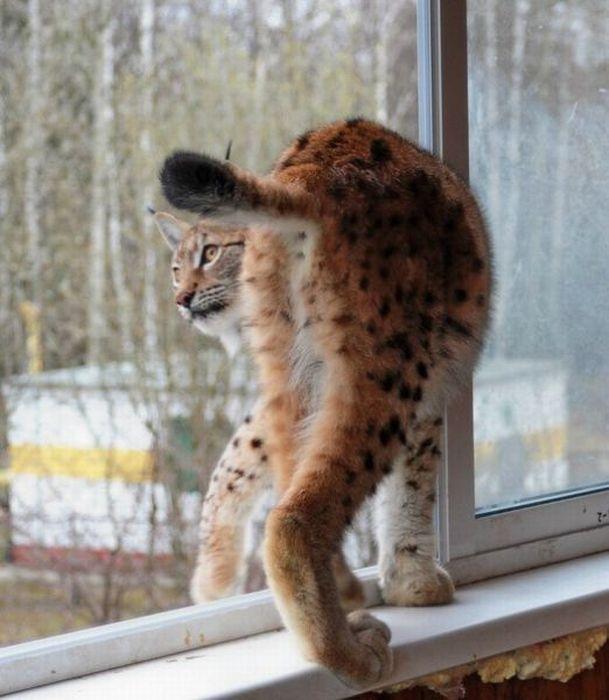 Домашний зоопарк (83 фото)