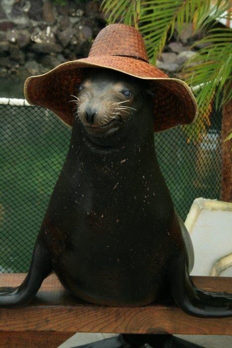 Животные в головных уборах (64 фото)