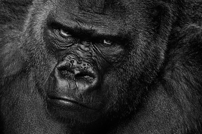 Приматы (111 фото)