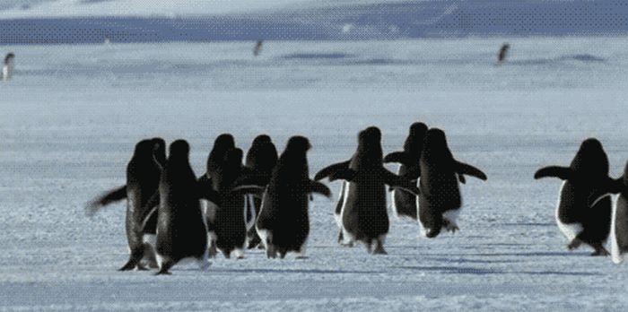 Анимация с пингвинами (25 гифок)