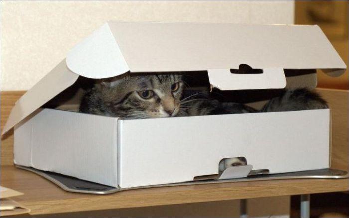 Двое в одной коробке. Далее. 1869 прочтений.