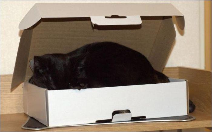 Два кота и всего лишь одна коробка (4 фото)