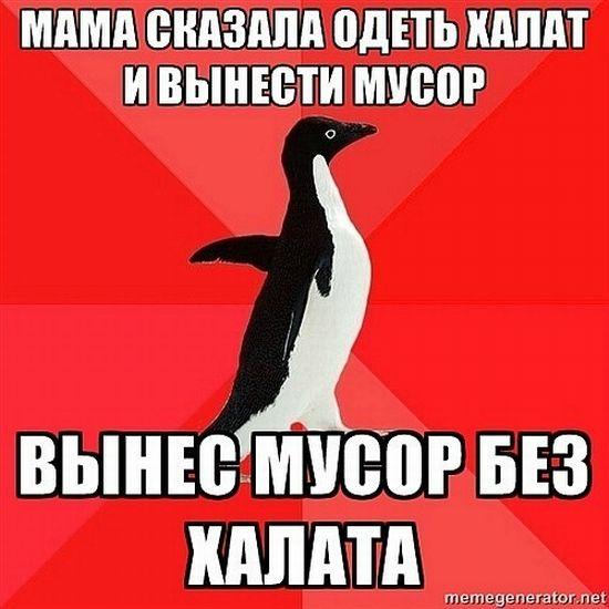 Злой пингвин (50 картинок)