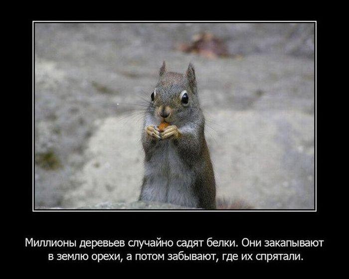 Факты из животного мира (15 фото)