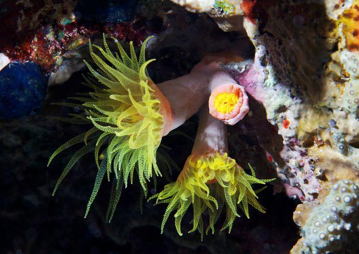 Подводный мир от Александра Семенова (58 фото)