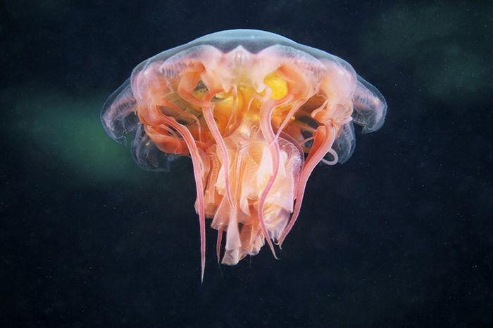 Подводный миротАлександра Семенова (58 фото)
