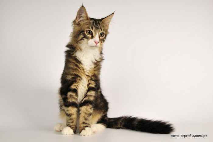 Кошачья фотосессия (36 фото)