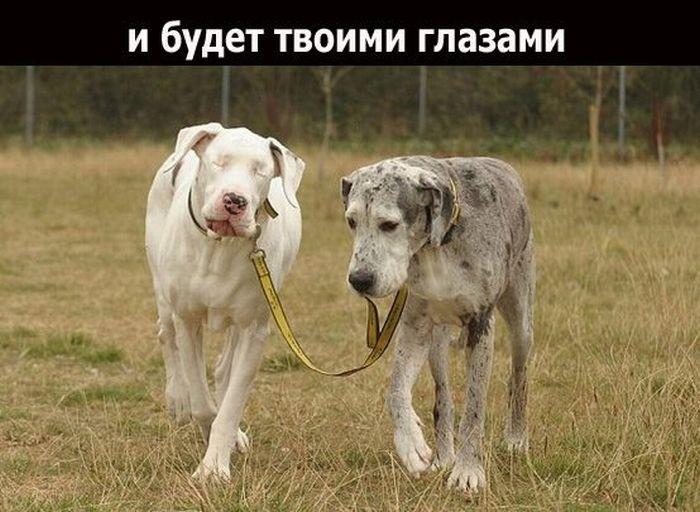 Дружба (19 фото)