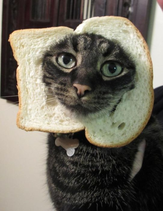 http://trinixy.ru/pics5/20120202/sandwich_01.jpg