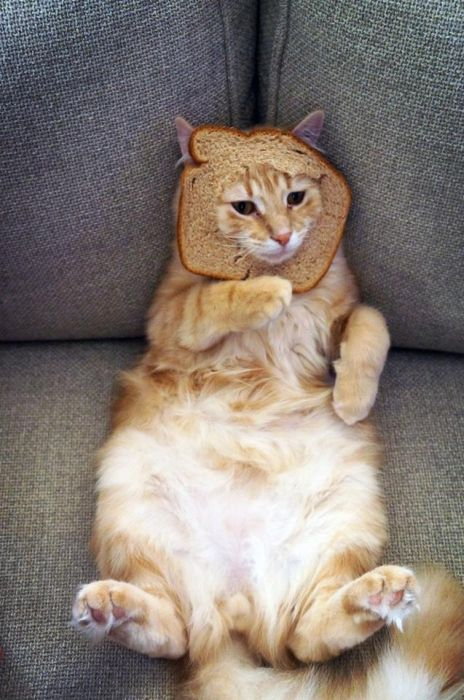 http://trinixy.ru/pics5/20120202/sandwich_03.jpg