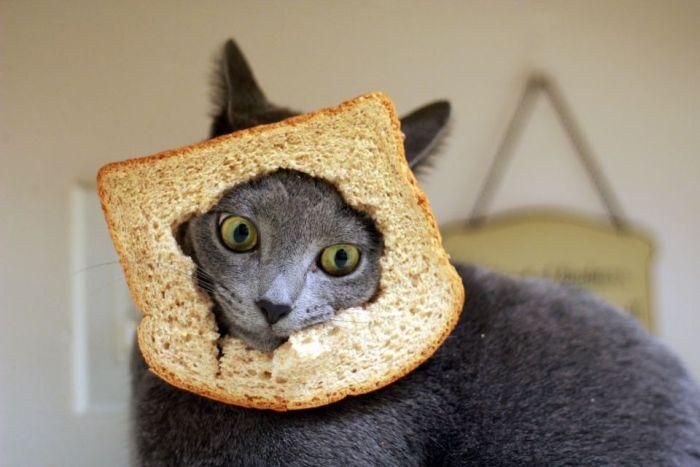 Котобутерброд (60 фото)