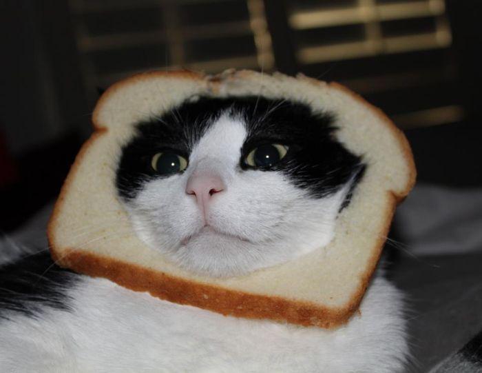 http://trinixy.ru/pics5/20120202/sandwich_07.jpg